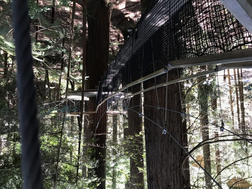 Suspended walkway in Taupo redwood forest